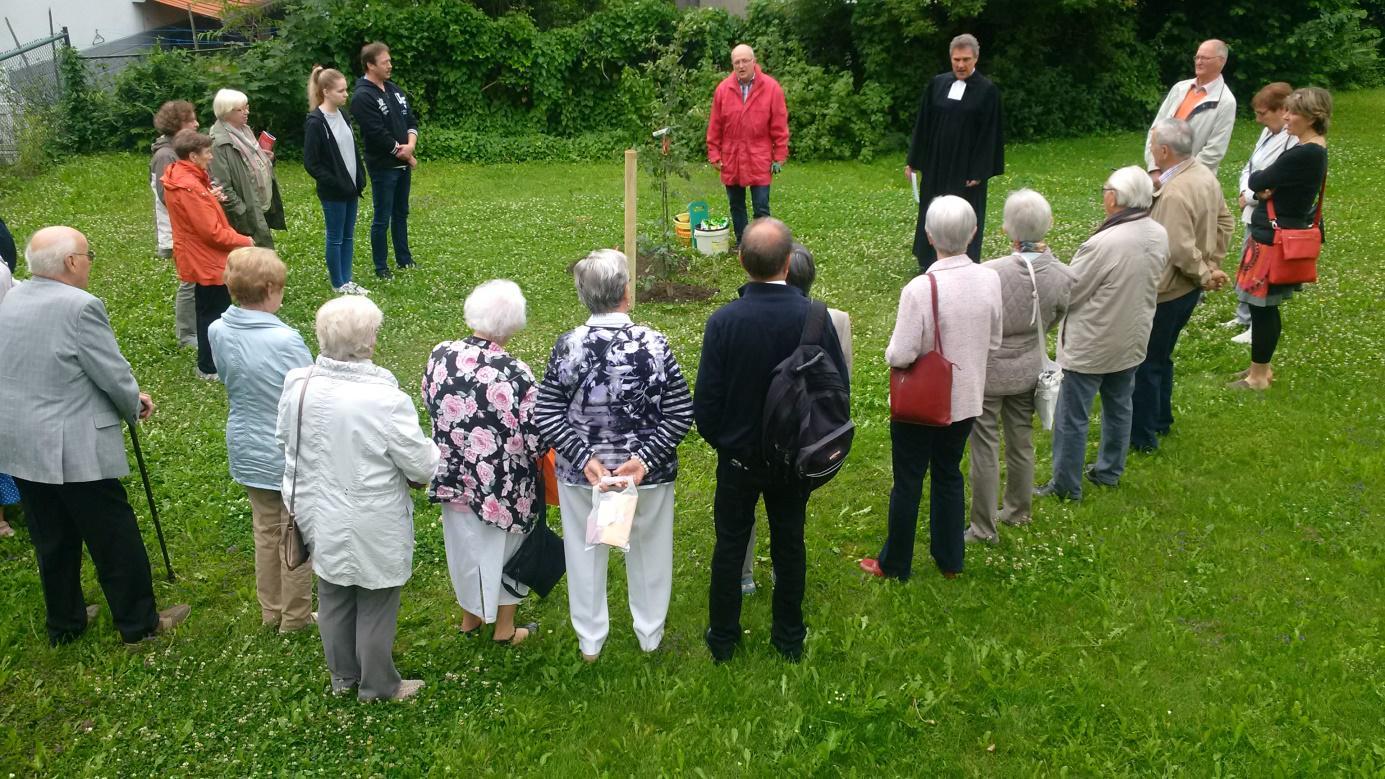 luthereiche-im-gemeindegarten-gepflanzt
